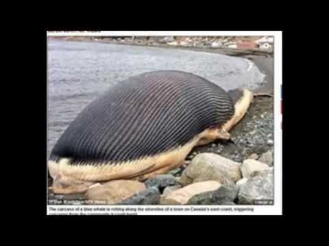 閲覧注意】腐敗したクジラがジェ...