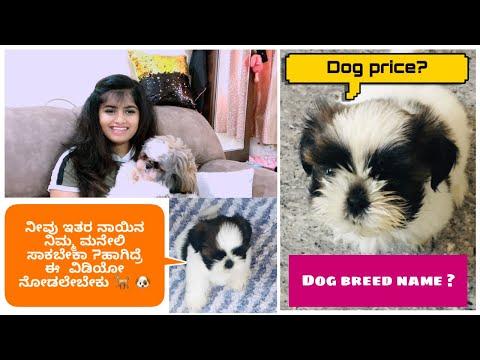 Dog (shih Tzu ) Full Information   Dog Price   How To Take Care Of Dog 🐕   Dog Expenses   Dog Care