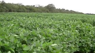 Ellos y nosotros estamos siendo exterminados por los agrotoxicos de los agronazis