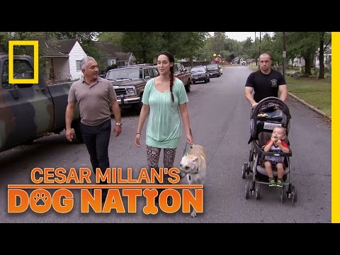 The Power of Confidence   Cesar Millan's Dog Nation