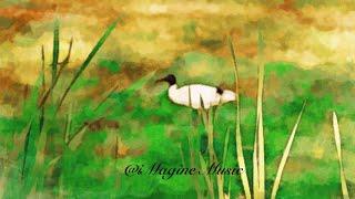 iMagine Music Podcast - Ep. 2: Animal Companion (Cantonese)