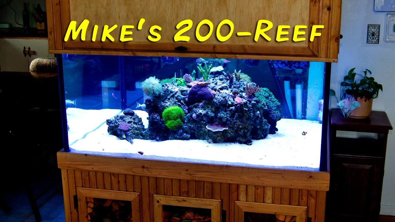Michael Crawfords 200 Gallon Reef Custom Aquariums