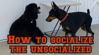 Learn how to socialize quickly but safely