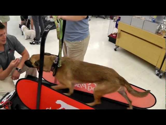 dogPACER - Dog Treadmill