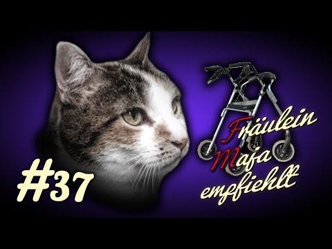 Alte Katzen-How To-Pflege Betagter Katzen-3 Einfache Tipps. Fräulein Maja Empfiehlt Teil 37