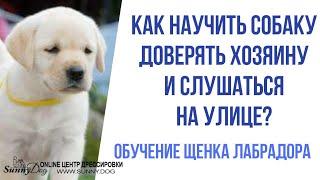 Обучение щенка лабрадора. Как научить собаку доверять хозяину и слушаться на улице?