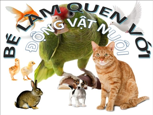 Bé làm quen với động vật nuôi | Cách tốt nhất để trẻ học con vật