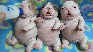 Сборник самых смешных видео с собаками Compilation of funniest videos with dogs