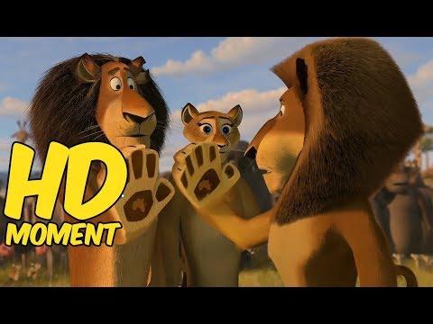Мультик про льва зебру бегемоты смотреть мультфильм онлайн