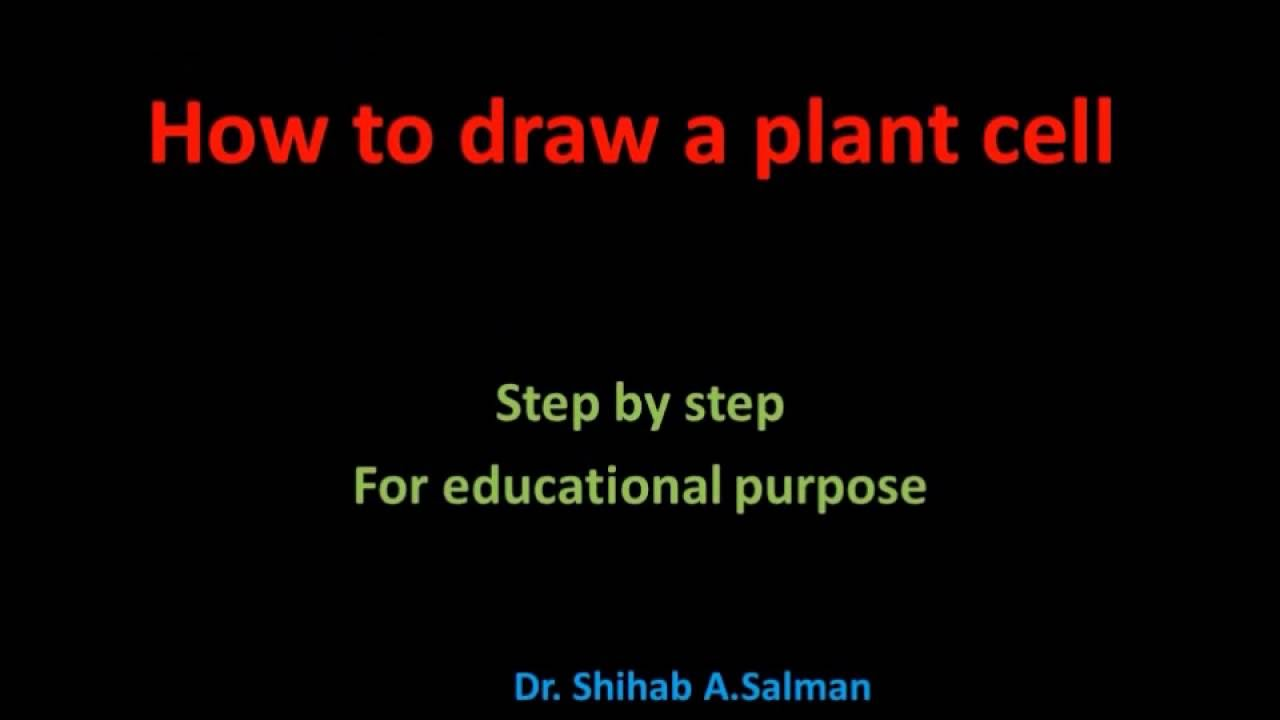 How to draw a plant cell step by step .Dr. Shihab A.Salman ...