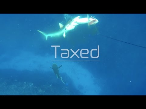 Breathless Addiction - Sharks attacking dogtooth tuna in tonga