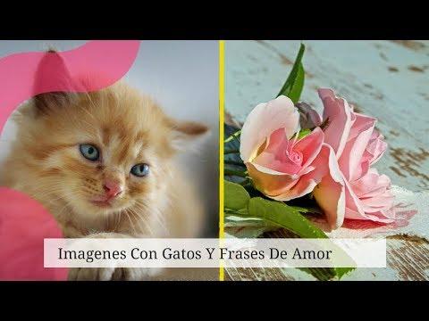 Imagenes Con Gatos Y Frases De Amor Youtube