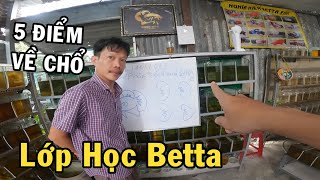 Anh Nhí mở lớp dậy chuyên sâu về Cá Betta - Phân Biệt Từng Loại Đuôi Cá Đẹp Xấu