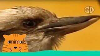 Zoboomafoo - Great Singers (Full Episode)