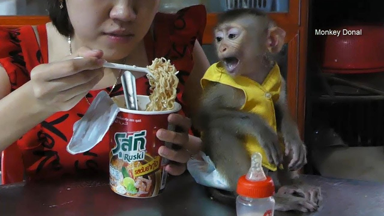 Look Like Donal Want To Test Thai Noodle With Mom