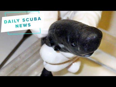 Daily Scuba News – New Shark Species Has Been Found