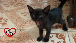 A Baby Black Kitten was Abandoned in the TRASH Box-Kitten Meowing Loudly for help WHOLE STORY