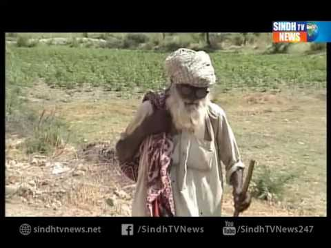 Otaque Documentary- Sindh TV News