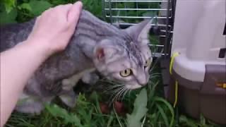 #998 Видео от Нины Кошкам жарко Сквика на прогулке