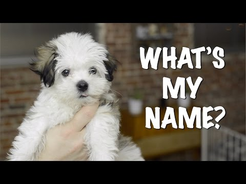 What's My Name? Puppy Name Reveal!