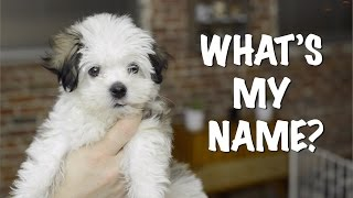 What's My Name? Puppy Name Reveal! Thumbnail