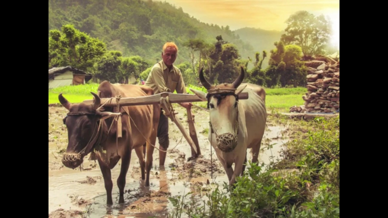 Cheapest Agricultural Land In Telangana