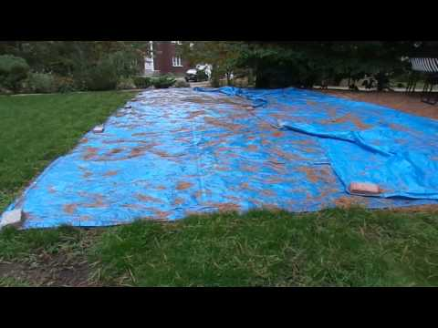 How To Get Rid Of Lawn Grubs Fast