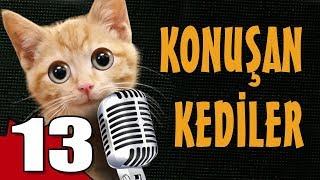 Konuşan Kediler 13 - En Komik Kedi Videoları