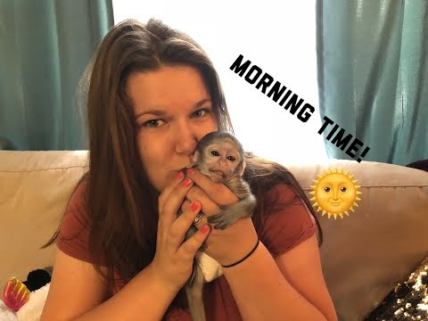 Baby monkey morning time | Max's morning Routine