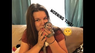 Download Baby monkey morning time | Max's morning Routine Mp3 and Videos