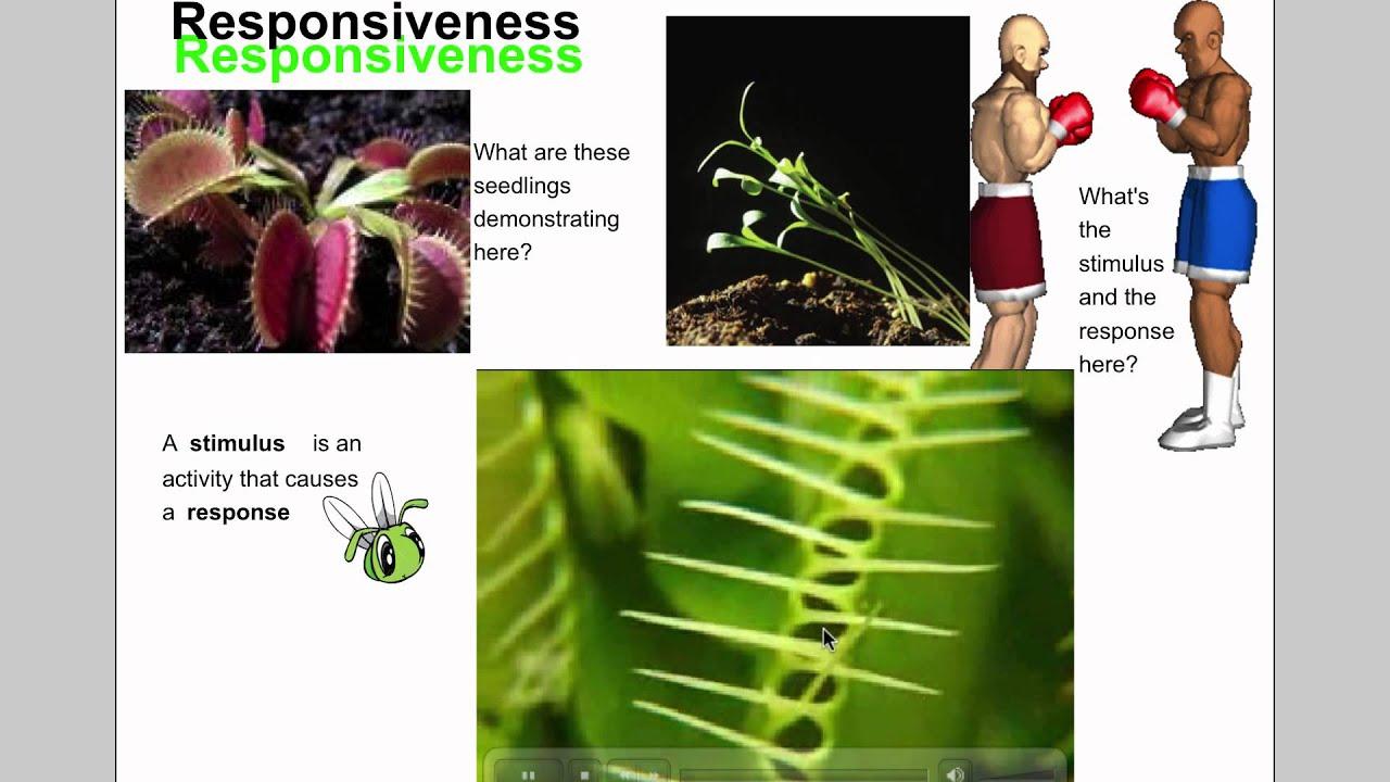 worksheet Biology Characteristics Of Life Worksheet characteristics of life grade 7 science youtube