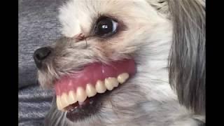 Что Случилось с Собакой, Она Стала Похожа на Монстра из Фильма Ужасов