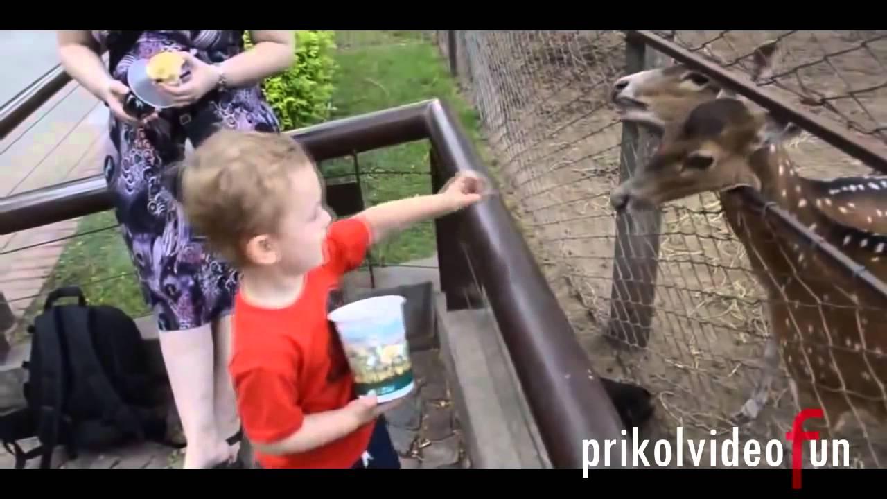 Люди Терпят Неудачу и 2013 Animals Watch Плачут за | смотреть смешных людей и животных