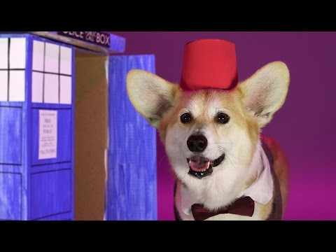 Cool Corgi Dresses Up As All 13 Doctors From 'Doctor Who'