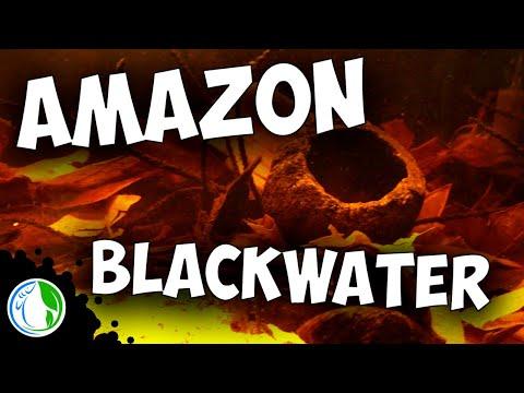 AMAZON BLACK WATER BIOTOPE AQUARIUM SETUP FOR WILD FISH