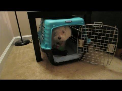 vlog-#598-bentley's-new-crib!-january-4,-2015