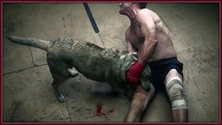 Köpek ve İnsan Dövüşü HD