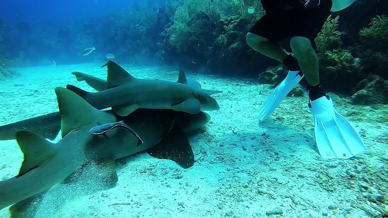 belize scuba diving ile ilgili görsel sonucu