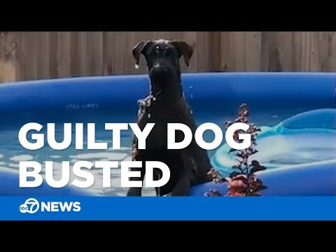 Dog looks guilty
