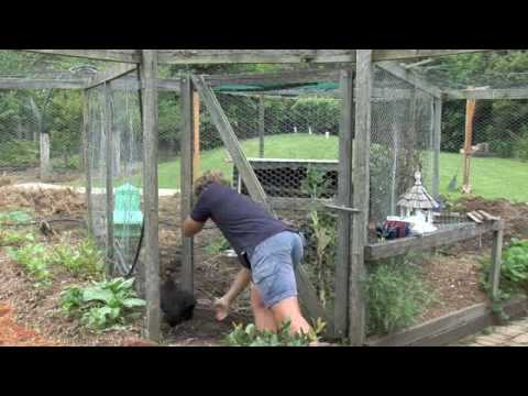 A. Grow your own organic vegetables with permaculture. Part 1 of 4
