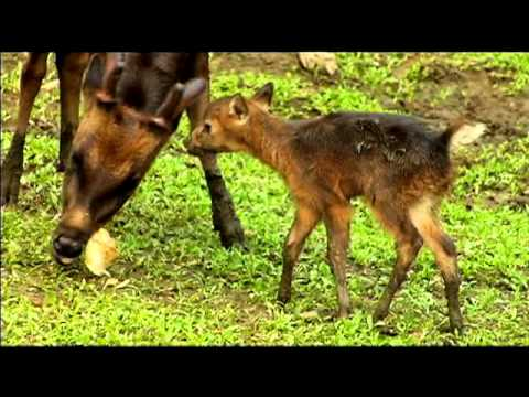 "Born to be Wild: ""Philippine Deer"" and ""Luzon's Cleanest River """