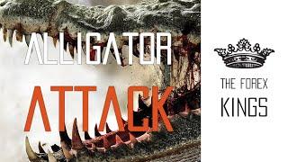Alligator attack. FOREX strategy