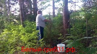 видео Заготавливаем веники для бани: березовые, дубовые, крапивные, липовые, хвойные, правила вязки веника