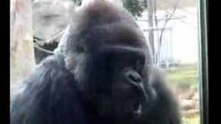 神戸市立王子動物園の「サポーターズディ」に参加してきました。ニシロ...