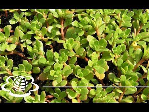 Вьющиеся растения. Виды вьющихся растений