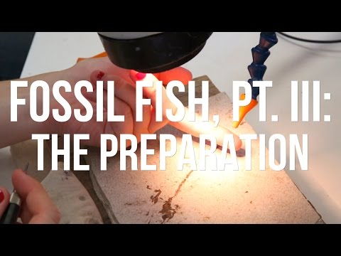 Fossil Fish, PT. III: The Preparation