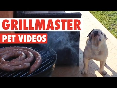 Funny Grillmaster 4th of July Pet Video Compilation 2016