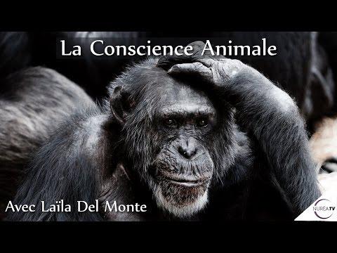 « La Conscience Animale » avec Laïla Del Monte - NURÉA TV