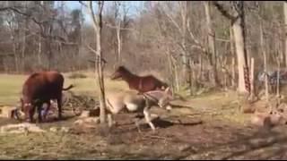At Ve Eşek