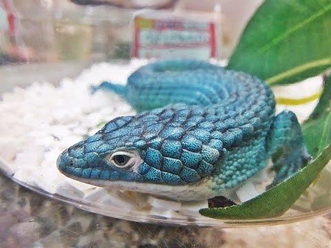 Reptile Expo In Japan 2014!~Kyushu Reptile Festival (Full HD)